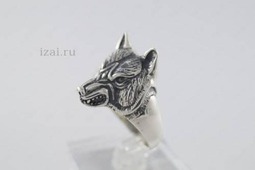 Кольцо волк или с головой волка из серебра и золота. izai (2)